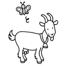 Cute Goat Coloring Chevre Pages