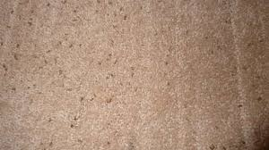 Do Carpet Beetle Bite by What Does Carpet Beetle Look Like And How To Clean It Easily