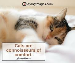 cat quotes 25 sweetest and funniest cat quotes sayingimages