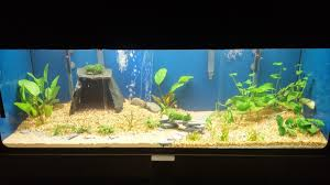 Aquascape - Twitter Search Aquascape Designs For Your Aquarium Room Fniture Ideas Aquascaping Articles Tutorials Videos The Green Machine Blog Of The Month August 2009 Wakrubau Aquascaping World Planted Tank Contest Design Awards Awesome A Moss Experiment Driftwood Sale Mzanita Pieces Two Gardens By Laszlo Kiss Mini Youtube Warsciowestronytop