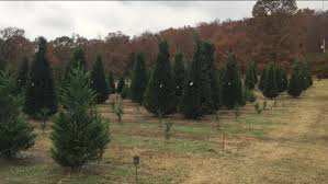 Does Kohls Sell Artificial Christmas Trees by Arkansas Christmas Tree Farms Only In Arkansas