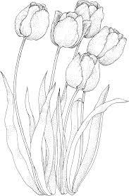 Tulipe 44 Nature Coloriages à Imprimer