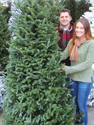 Silver Tip Christmas Tree Los Angeles by How To Choose U0026 Maintain A Fresh Christmas Tree Install It Direct