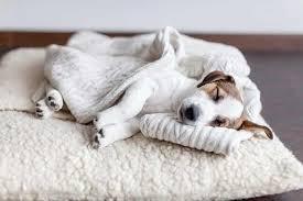 der perfekte schlafplatz für den hund im haus modern dogs de