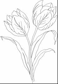 Amazing Printable Tulips Flower Coloring Pages With Tulip And