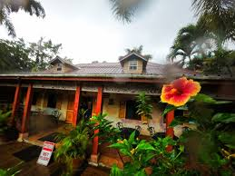 100 House Ocho Hibiscus And Monsoon Rain At Chukka Tour Rios
