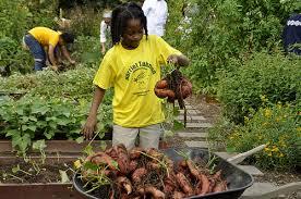 Types Of Pumpkins Grown In Uganda by 10 Reasons We U0027re Sweet On Sweet Potatoes And Why You Should Be Too