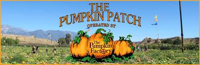 Live Oak Canyon Pumpkin Patch 2015 by Live Oak Canyon Pumpkin Patch And Christmas Tree Farm