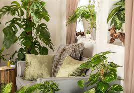 hängende zimmerpflanzen blumen möbius