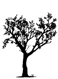 Tree Drawing With Roots Tree Drawing Easy With Roots – Note9