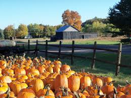 Pumpkin Farms In Bay County Michigan by Montrose Orchards Montrose Orchards
