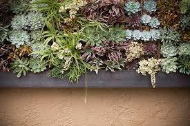 Succulent Vertical Living Wall Art By Singing Gardens