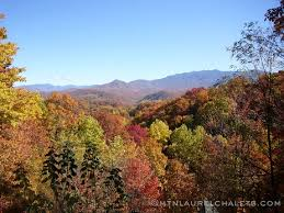 One Bedroom Cabins In Gatlinburg Tn by One Bedroom Cabins In Gatlinburg Cryp Us