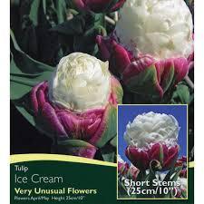 bulbs tulip bulbs for sale mail order