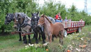 Kent Farms Pumpkin Patch by List Pumpkin Patches Hayrides And Corn Mazes In West Michigan