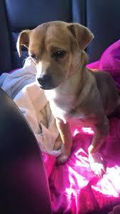 Poplar Grove Pumpkin Patch Wilmington Nc by Lost U0026 Found Dogs North Carolina Home Facebook
