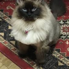 mobile cat grooming pride mobile pet grooming 61 photos 148 reviews pet groomers