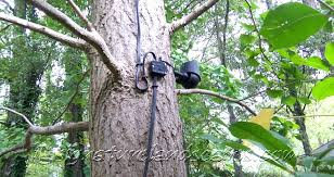 Led Lights Trees Night Lighting Wire Connector And Flood Light Fixture Mounted On Tree Trunk