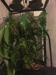 Basking Lamp For Chameleon by 20 Basking Lamp For Chameleon Sandra S Uromastyx Page Amaze