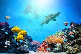 Underwater Wall Murals Sea Wallpaper