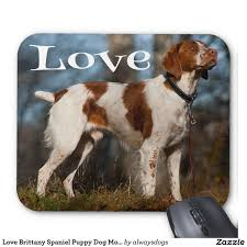 Do Brittany Spaniels Shed Hair by 20 Best Brittany Spaniel Images On Pinterest French Brittany