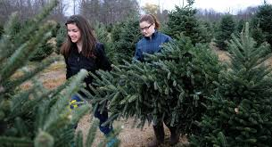 Xmas Tree Farms Albany Ny by Where To Cut Down Your Own Christmas Tree In The Finger Lakes