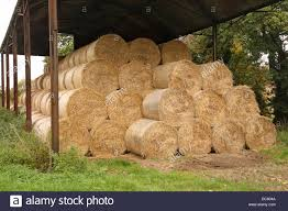 Barn With Hay Bales Storage In Wales, UK Stock Photo, Royalty Free ... 3 Barns Lessons Tes Teach Hay Barn Interior Stock Photo Getty Images Long Valley Heritage Restorations When Where The Great Wedding Free Hay Building Barn Shed Hut Scale Agriculture Hauling Lazy B Farm With Photos Alamy For A Night Jem And Spider Camp Out In That Belonged To Richardsons Benjamin Nutter Architects Llc Filesalt Run Road With Hoodjpg Wikimedia Commons Press Caseys Outdoor Solutions Florist Cookelynn Project Dry Levee Salvage