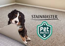 Coles Fine Flooring Teacher Giveaway by Stain Protection For Your Carpet Coles Fine Flooring