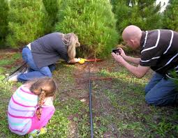 Christmas Tree Baler by Family Christmas Tree Farm 92021 El Cajon 300 Pepper Drive