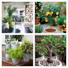 plante dans chambre à coucher idee deco chambre a coucher 13 plante en pot pour terrasse 50