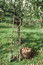 Pumpkin Farms In Bay County Michigan by Best 25 Apple Farm Ideas On Pinterest Apple Orchard Apple Tree