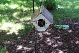 Free Images : Insect, Backyard, Garden, Invertebrate, Woodland ... Backyard Birdhouse Youtube Free Images Insect Backyard Garden Inverbrate Woodland Amazoncom Boys Woodworking Bbw81 Cardinal Nest Box Bird House Decorative Little Wren Haing Yard Envy Table Lawn Home Green Lighting Wooden Modern Take On A Stuff We Love Pinterest Shop Glory 8125in W X 85in H 8in D White Discovery Channel Birdhouse Wooden Nesting Baby Birds In My Bird House How To Make Spring Diy Craft For Kids Couponscom