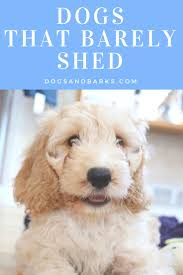 Do Cockapoo Mixes Shed by 308 Best Pet Products Recipes U0026 Crafts Images On Pinterest