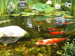 Pond | Cedarrunlandscapes.com Beyonc Shares Stunning Behindthescenes Photos From Her Grammys Aquascape For A Traditional Landscape With Pittsford Ny And Aquascape Patio Ponds Uk 100 Images Pond Superb Pond Build In Dingtown Pa Ce Pontz Sons Contractors The Ultimate Backyard Oasis Inc Choosing The Perfect Water Feature Your Yard Features Aquarium Beautify Home With Unique Designs Certified Waterpaw Patio D R Excavating Landscaping Ponds Waterfalls Waters Edge Aquascaping Waterfalls Accsories