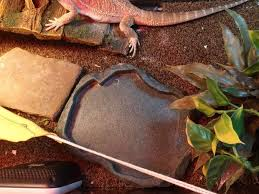 Bearded Dragon Heat Lamp Timer by The Proper Way To Set Up A Bearded Dragon Enclosure 5 Steps With