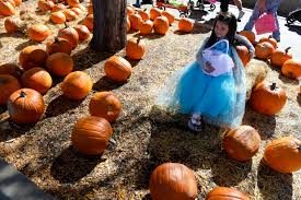 Denver Pumpkin Patch record setting halloween warmth in the denver metro area u2013 the