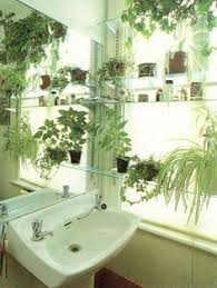 Plants In Bathroom Images by The Best Bathroom Plants For Your Interior Bathroom Plants