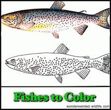 Pics Coloring Freshwater Fish Pages New At A To Z Pictures Collection Of