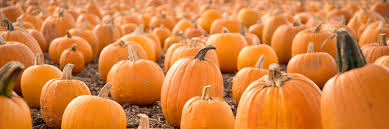 Varieties Of Pumpkins Uk by Take Your Pick Undley Farm Events