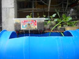 Back Yard Fish Farming Philippines Aquaponics: A System Of ... Image Of Tambuka Backyard Fish Farming Aquaculture Pinterest Backyard Landscape Design Tilapia Farm For Sale Turn Your Backyard Into A Raise At Home Inspirational Architecturenice Genetic Research Turning Into Major Global Commodity Photo With Wonderful In The Aquaponic Update Steps Back Now Picture On Rice Capvating Aquaponics Design And Ideas House Backyards Bright Olympus Digital Camera Traing Learn From Anywhere Pictures