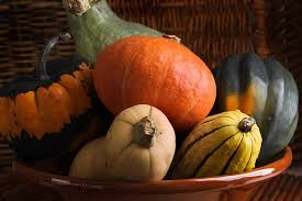 Types Of Pumpkins Grown In Uganda by Growing Zucchini U0026 Squash
