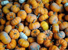 Southern Illinois Pumpkin Patches by Local Pumpkin Patches Offer Unique Attractions Local News