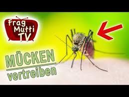 stechmücken fliegen bekämpfen 60 hausmittel tipps