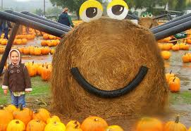 Pumpkin Patch Issaquah by 7 Best Pumpkin Patches And Corn Mazes In South Puget Sound Parentmap