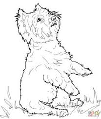 Yorkshire Terrier Or Yorkie Coloring Page