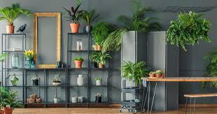 11 zimmerpflanzen für dunkle ecken mein schöner garten