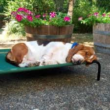 amazon com amazonbasics elevated cooling pet bed small pet