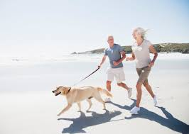 What Dogs Dont Shed Too Much by The Best Dog Breeds For Seniors