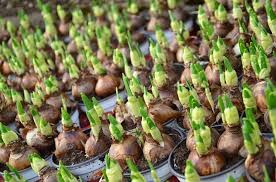 fall is the best time to plant bulbs for blooms