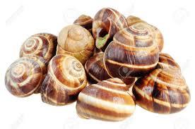 cuisine bourgogne bourgogne snails with garlic butter cuisine stock photo